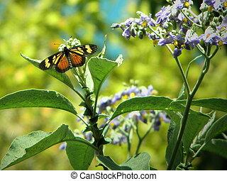 mariposa - una mariposa, posada en una flor