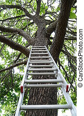 Ladder going up to a tree