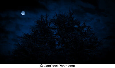 Scary Trees Under Moon On Stormy Night - Group of spiky...