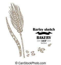 Ears of barley. Hand drawn cereal set. Bakery logo design. Vector illustration