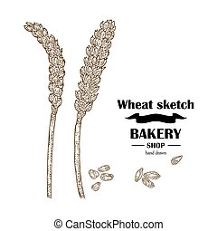 Ears of wheat. Hand drawn cereal set. Bakery logo design. Vector illustration