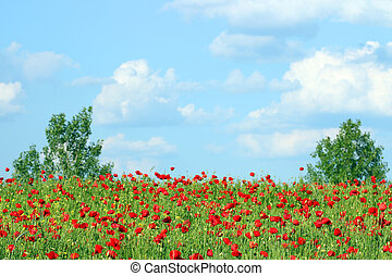 poppies flower meadow country landscape
