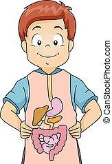 Kid Boy Digestive System Apron