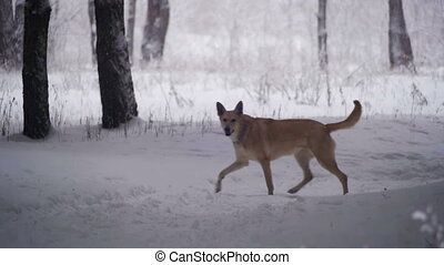 Dog Walking in Winter Forest. Slow Motion