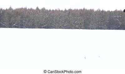 Winter hiker with big backpack walk with snowshoes in powder...
