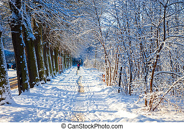 Winter sunny alley