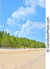 Beach and pine forest at morning. - Beach and pine forest at...