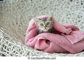 soggy kitten after a bath - Cute soggy kitten after a bath...