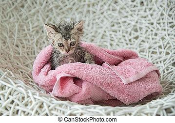 soggy kitten after a bath - Cute soggy kitten after a bath...