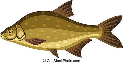 Common bream, freshwater, bronze carp breamfish marine...