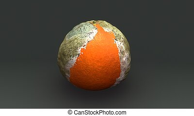 Rotten orange - The fruit of the Citrus × sinensis is...