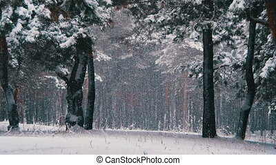 Snow Falling in Winter Pine Forest with Snowy Christmas Trees