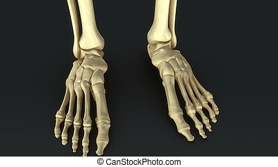 Synovial Joints_aerial - Synovial Joints aerial view