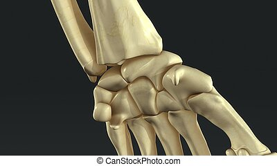 Synovial Joints_closeup - Synovial Joints close up view
