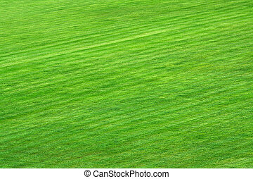 Stadium field - Green grass on playing field