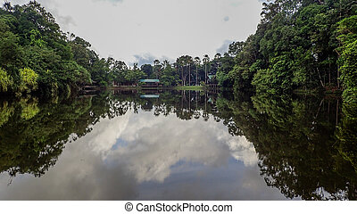 The lake at Rainforest Discovery Centre In Sepilok, Borneo -...