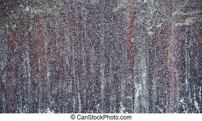 Snow falling in Winter Pine Forest - Winter forest with...