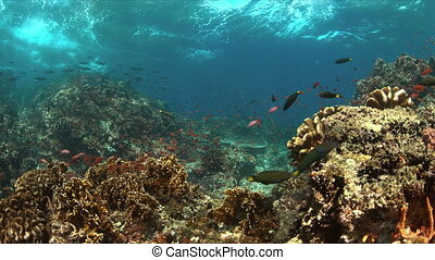 Coral reef with plenty fish - Colorful coral reef with...