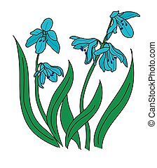 snowdrop 2.eps - The turquoise snowdrop on a white...
