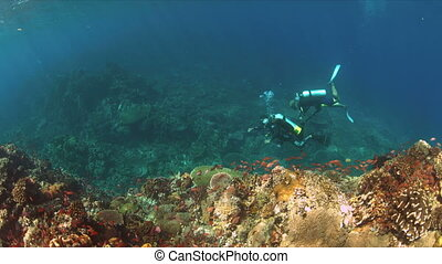 Diver on a coral reef with plenty fish - Colorful coral reef...