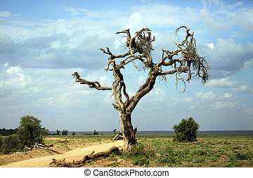 Amboseli national park - Dry tree in the African savannah....