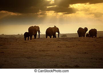 Elephants in Amboseli national park, Kenya