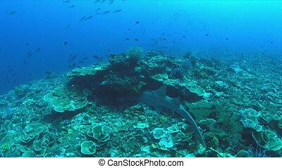Nurse shark on a coral reef. 4k - Nurse shark on a coral...