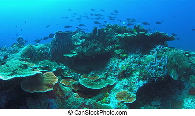 Nurse shark on a coral reef.