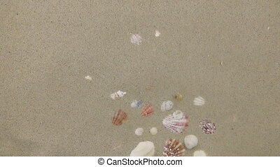 Wind blows off sand with a background of seashells.