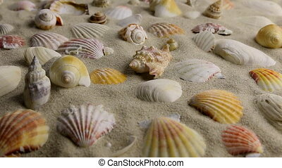 Approximation of seashells lying on the sand, beautiful...