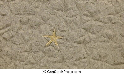 Approximation of starfish lying on the sand and her...