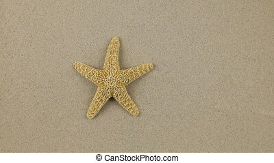 Approximation of starfish lying on the sand, zoom.