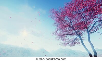 Petals falling from flowering sakura tree slow motion -...