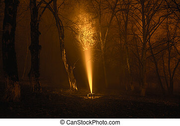 surreal light in dark forest, Magic fantasy lightsin the...