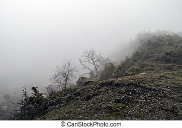 Forested mountain slope in low lying cloud with the...
