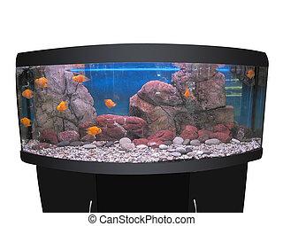 aquarium - The image of aquarium under the white background