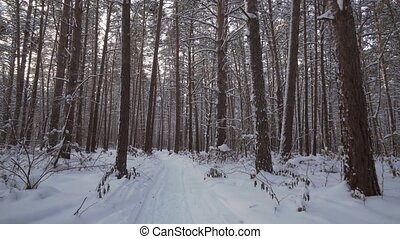 Travel through beautiful winter snow-covered forest - Travel...