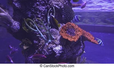Beautiful saltwater aquarium corals and tropical fish -...
