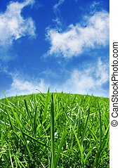 Green grass & blue skys