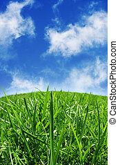 Green grass & blue skys