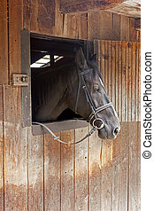 A horse peeks from the stable door - The head of a horse...