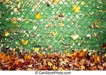 Autumn leaves on a fence