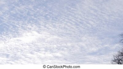 Pan of cloudy sky and big tree without leafs - Pan of a...