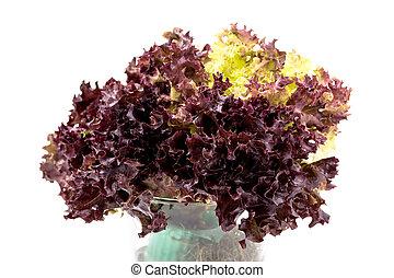 Salad leaves, Red Leaf Lettuce - Salad leaves with Green...