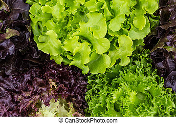 Mix Salad Leaves Background - Healthy Salad leaves can use...