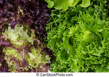 Mix Salad Leaves Background - Salad leaves with Green Oak,...