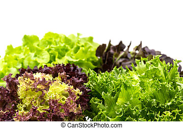 Healthy Salad on n white background - Salad leaves with...