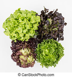 Top view of Mix Salad Leaves Background - Salad leaves with...