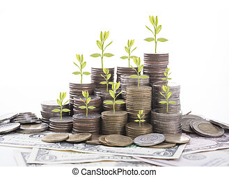 Business tree finance and banking concept investment for background.