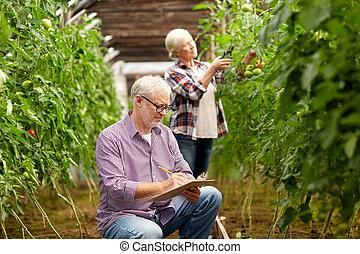 senior couple growing tomatoes at farm greenhouse - farming,...